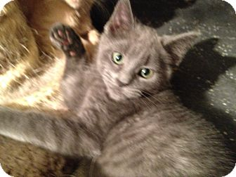 Domestic Mediumhair Kitten for adoption in East Hanover, New Jersey - Twister