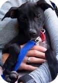 Miniature Pinscher/Terrier (Unknown Type, Small) Mix Dog for adoption in Marietta, Georgia - Spryte
