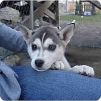 Adopt A Pet :: Naga - Jacksonville, NC