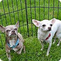Adopt A Pet :: Dora - Chagrin Falls, OH
