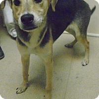 Adopt A Pet :: YepYep - Gary, IN