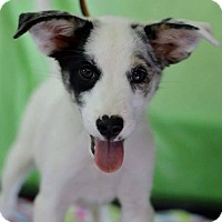 Adopt A Pet :: Corral - Bedminster, NJ