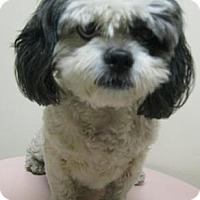 Adopt A Pet :: Maggie - Gary, IN