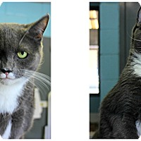 Adopt A Pet :: Caterina - Forked River, NJ