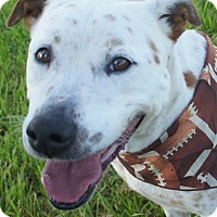 Adopt A Pet :: Mickey- adopt for $50! - Friendswood, TX
