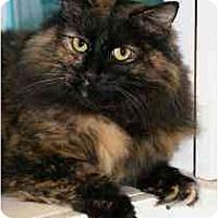Adopt A Pet :: Gwen - Marietta, GA