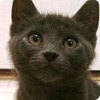 Adopt A Pet :: Riley - Reston, VA