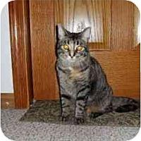 Adopt A Pet :: Sam - Milwaukee, WI