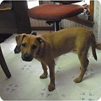 Adopt A Pet :: Mickey - Russellville, AR