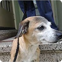 Adopt A Pet :: Alfie - Sunnyvale, CA