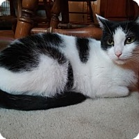 Adopt A Pet :: Adora - Delmont, PA