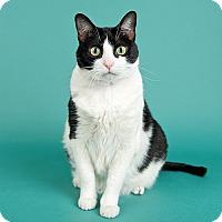 Adopt A Pet :: Emma - Wilmington, DE