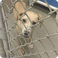 Adopt A Pet :: Jenny - Goodlettsville, TN