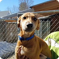 Adopt A Pet :: Mocha - Freeport, ME