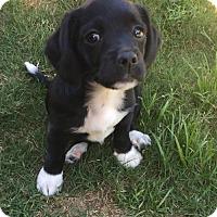 Adopt A Pet :: Kissy - Houston, TX
