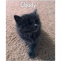 Adopt A Pet :: Cloudy - Herndon, VA
