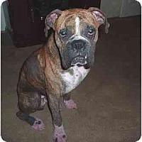 Adopt A Pet :: Skip - Tallahassee, FL