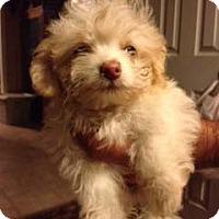 Adopt A Pet :: MAKENNA - Mission Viejo, CA