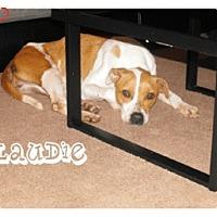 Adopt A Pet :: Laudie - Geismar, LA