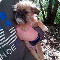 Adopt A Pet :: Barbie - Antioch, IL