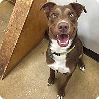 Adopt A Pet :: Bogart - Austin, TX