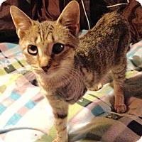 Adopt A Pet :: DQ - East Brunswick, NJ