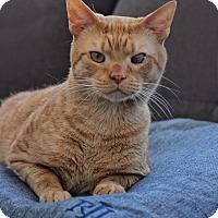 Adopt A Pet :: Crusher - Wayne, NJ