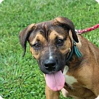 Adopt A Pet :: Jack Dempsey - Harmony, Glocester, RI