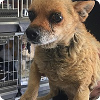 Adopt A Pet :: Muffin - California City, CA
