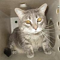 Adopt A Pet :: LOVEY - Reno, NV