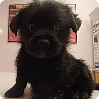Adopt A Pet :: Winston - Pocahontas, AR