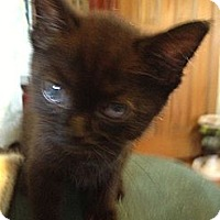 Adopt A Pet :: Pixie - Westfield, MA