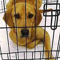 Adopt A Pet :: Bonnie - Beaumont, TX