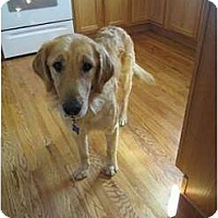 Adopt A Pet :: Rusty - Denver, CO