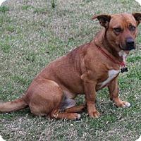 Adopt A Pet :: Peeson - Vidor, TX