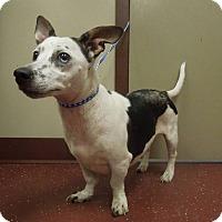 Adopt A Pet :: Zoie - Wisconsin Dells, WI