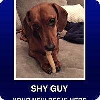 Adopt A Pet :: Oscar Mayer - Morrisville, PA