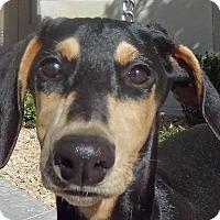 Adopt A Pet :: Emmy - Las Vegas, NV