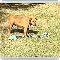 Adopt A Pet :: Mocha - Ruskin, FL