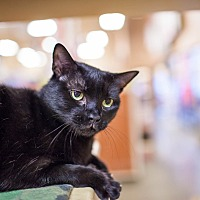 Adopt A Pet :: Dahlia - Statesville, NC