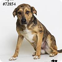 Australian Cattle Dog Mix Dog for adoption in Baton Rouge, Louisiana - Spot