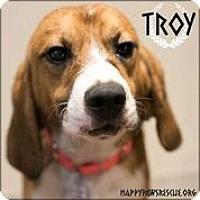 Adopt A Pet :: Troy - South Plainfield, NJ