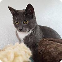 Adopt A Pet :: Merino - San Carlos, CA