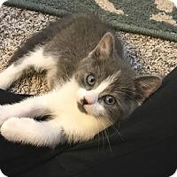 Adopt A Pet :: Carter - Woodland Hills, CA