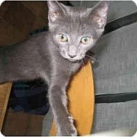 Adopt A Pet :: Sydney - New York, NY