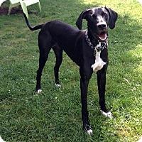 Adopt A Pet :: DeDe - Pearl River, NY