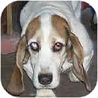 Adopt A Pet :: Benjamin - Phoenix, AZ