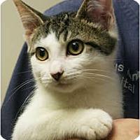 Adopt A Pet :: Postie - Secaucus, NJ