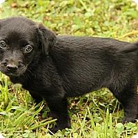 Adopt A Pet :: Clarice - Staunton, VA