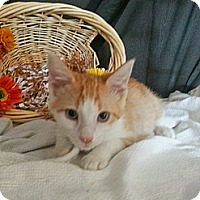 Adopt A Pet :: Lawrence - Clearfield, UT